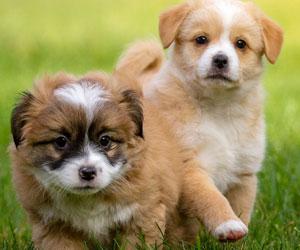 Checkliste Hundekauf