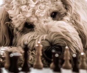 Welche Hunderasse passt zu mir?