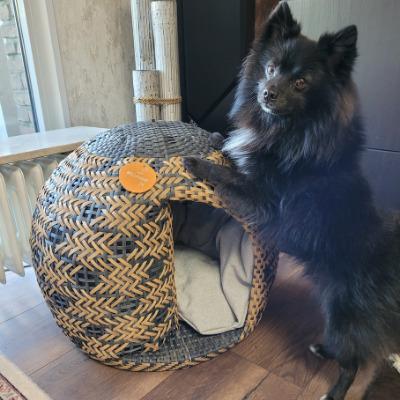 Chihuahua steht mit Vorderbeinen auf dem Hundekorb