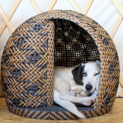 Schwarz weißer Hund liegt im Körbchen