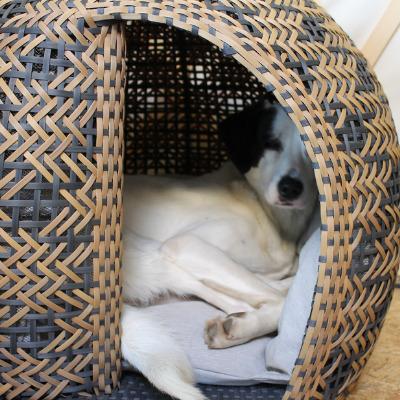 Schwarz weißer Hund schläft im Körbchen