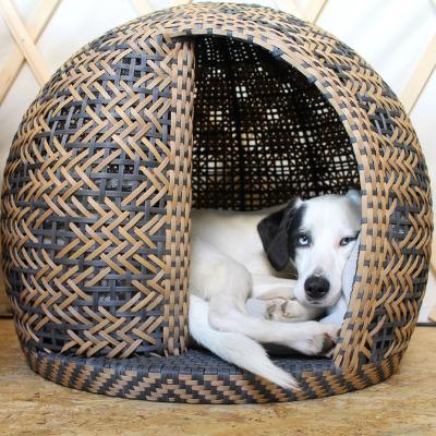 Schwarz weißer Hund enstapnnt im Hundekorb