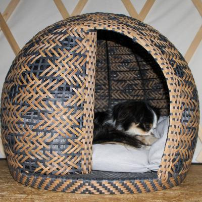 Tricolore Hund schläft im Hundekorb