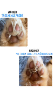 Vorher Nachher Vergleich mit Hundepfoten