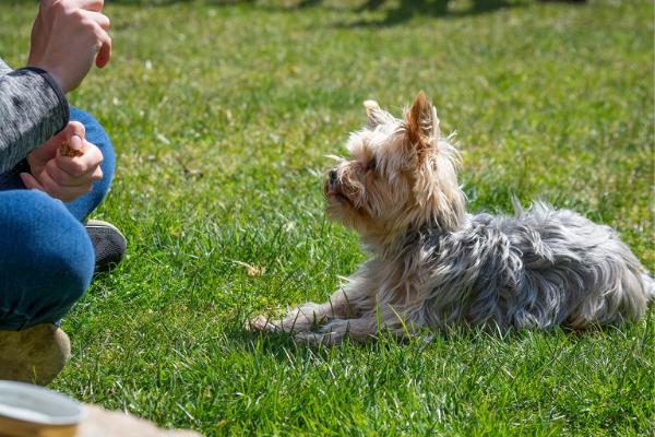 Clickertraining Hund Belohnung