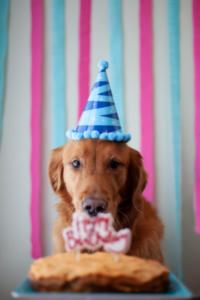 Hund vor Kuchen