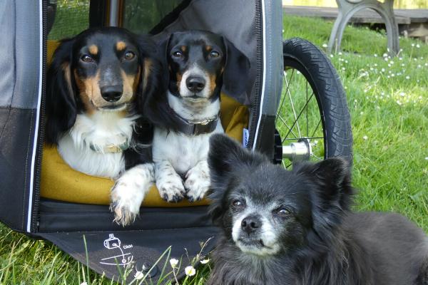 Hunde im Croozer Anhänger