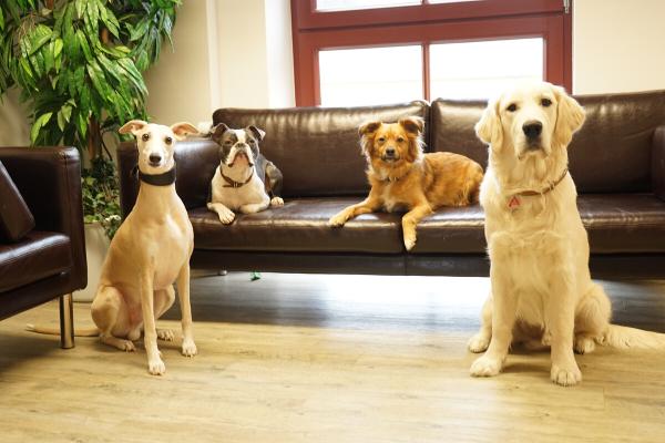 Bürohunde edogs