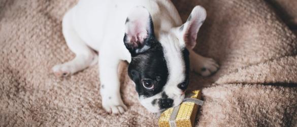 hund-mit-geschenk-diy-adventskalender