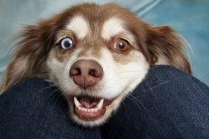 Hund kuschelt mit Besitzer