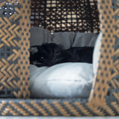 Hund schläft im Hundekorb von Bellfugio