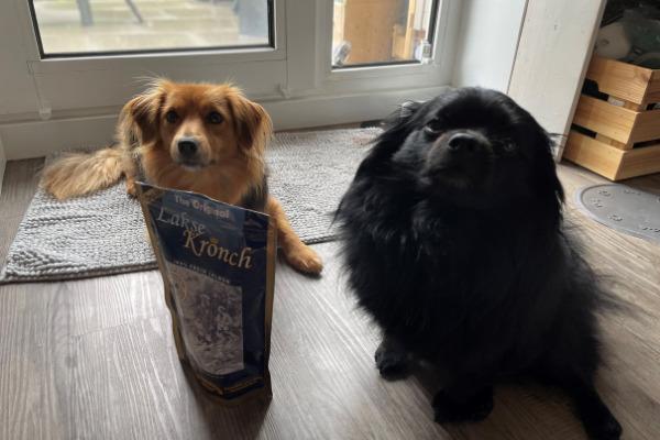 Hunde sitzen vor den Leckerlis von Henne Pet Food