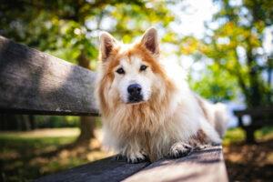 Elo-Hund auf einer Bank