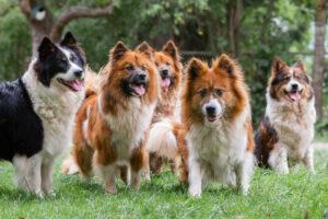 Elo Hunde in der Gruppe