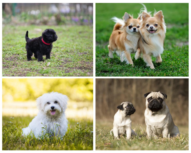 Welcher Hund passt zu mir? Teste Dich! | edogs.de Magazin