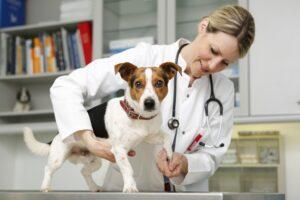 Hund humpelt: Tierarztbesuch bei einem stumpfen Trauma beim Hund