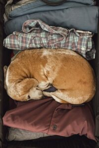 Hund im Nest