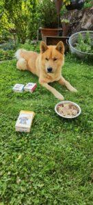 Großer Hund liegt auf dem Rasen und schaut sein Futter an