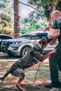 Polizeihund Ausbildung