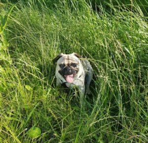 Retromops im Gras