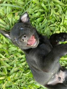 Taiwan Hund Welpe