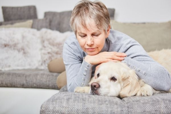 Alter Hund mit Mensch