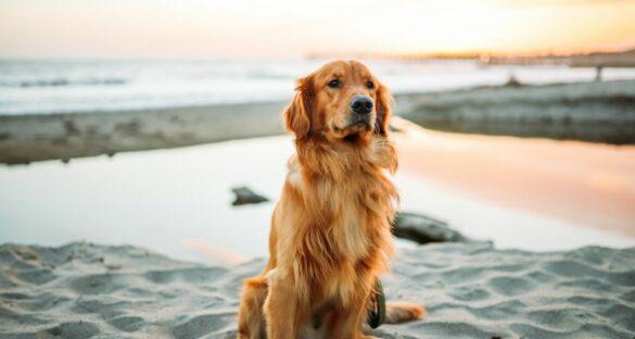 Die besten Hunde Sprüche: Hund am Strand bei Sonnenuntergang