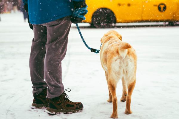 Blindenhund mit Besitzer im Verkehr