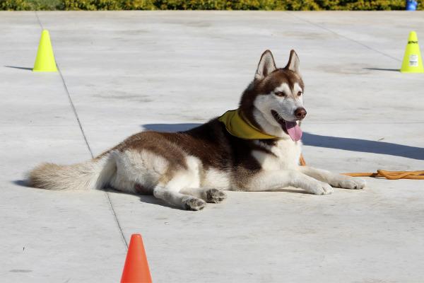 Hund in der Ausbildung