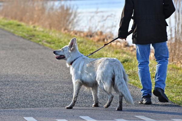 Blindenhund mit Halter