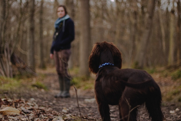 Blindenhund mit Mensch