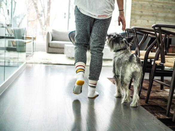 dog-dancing-hund-neben-mensch