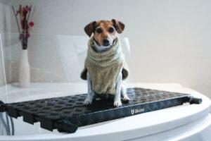 Erfahrungen Badewannenaufsatz Skund: Hund von Testerin