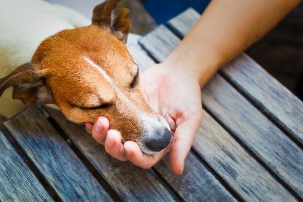 Erkrankter Hund wird gestreichelt