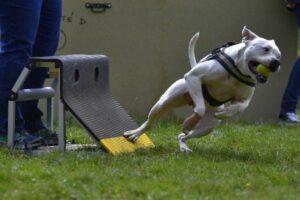 Flyball: Hund in der Wende