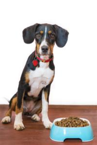 gesundes-hundefutter-trockenfutter