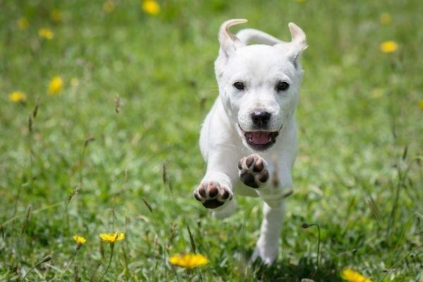 Glücklicher Hund auf einer Wiese