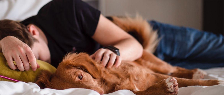 Warum leckt mein Hund mich immer ab: Herrchen kuschelt mit Hund im Bett