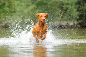 Hund Actionfoto