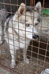 Hund aus Tierheim adoptieren