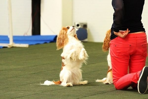 Hund beim Dog Dancing