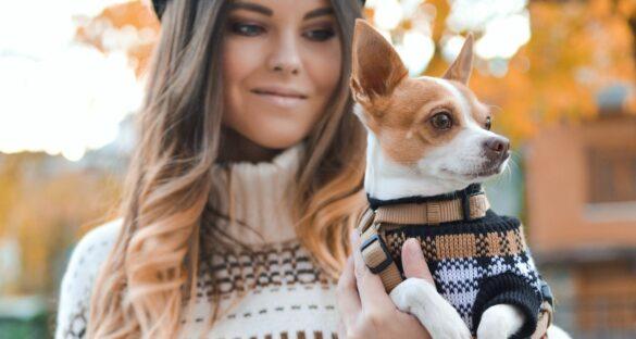 Hund Dating: Junge Frau hält Chihuahua in der Hand