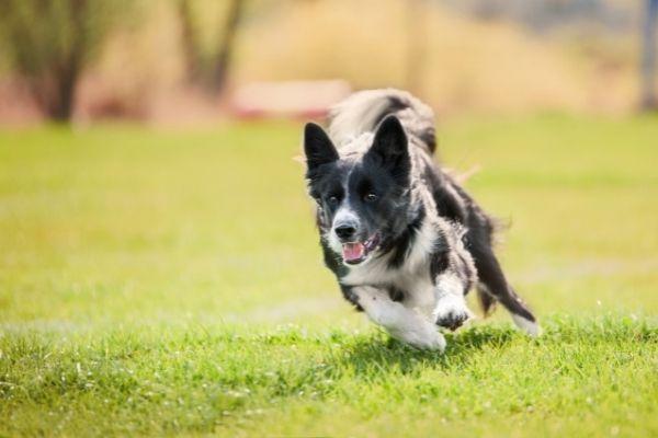 Hundesport: Hund im Auslauf