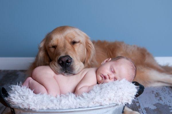 Hund legt Kopf behutsam auf einen Säugling