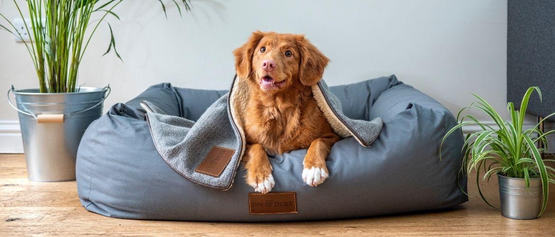 Bestes Hundebett: Hund liegt Hundebett
