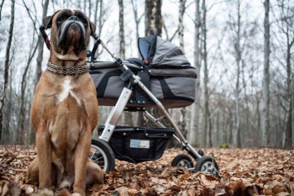 Hund neben Kinderwagen