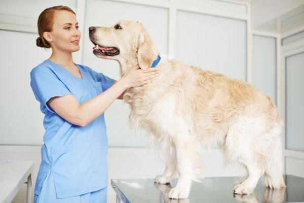 Hund Niereninsuffizienz: Vierbeiner wird behandelt