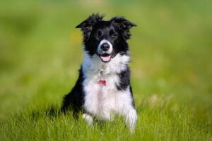 Hund Portraitfoto