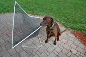 Hund richtet Schaden an
