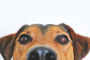 Hund schaut in die Augen